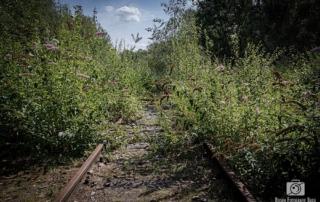 Alte Gleisanlagen