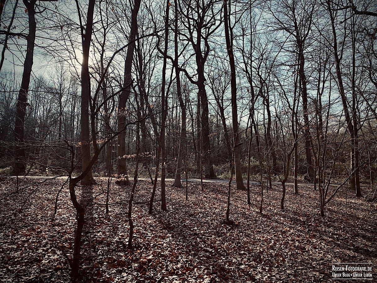 Duisburger Wald