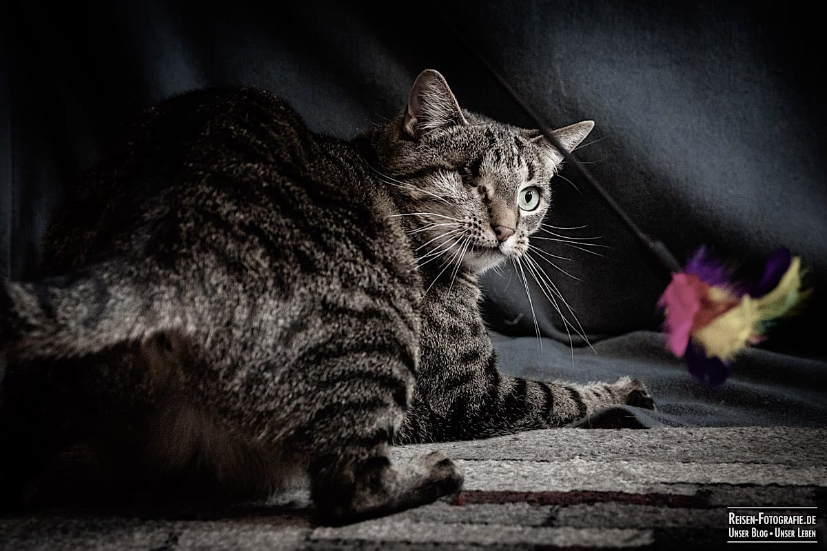 Katzenschooting Ostern 2021