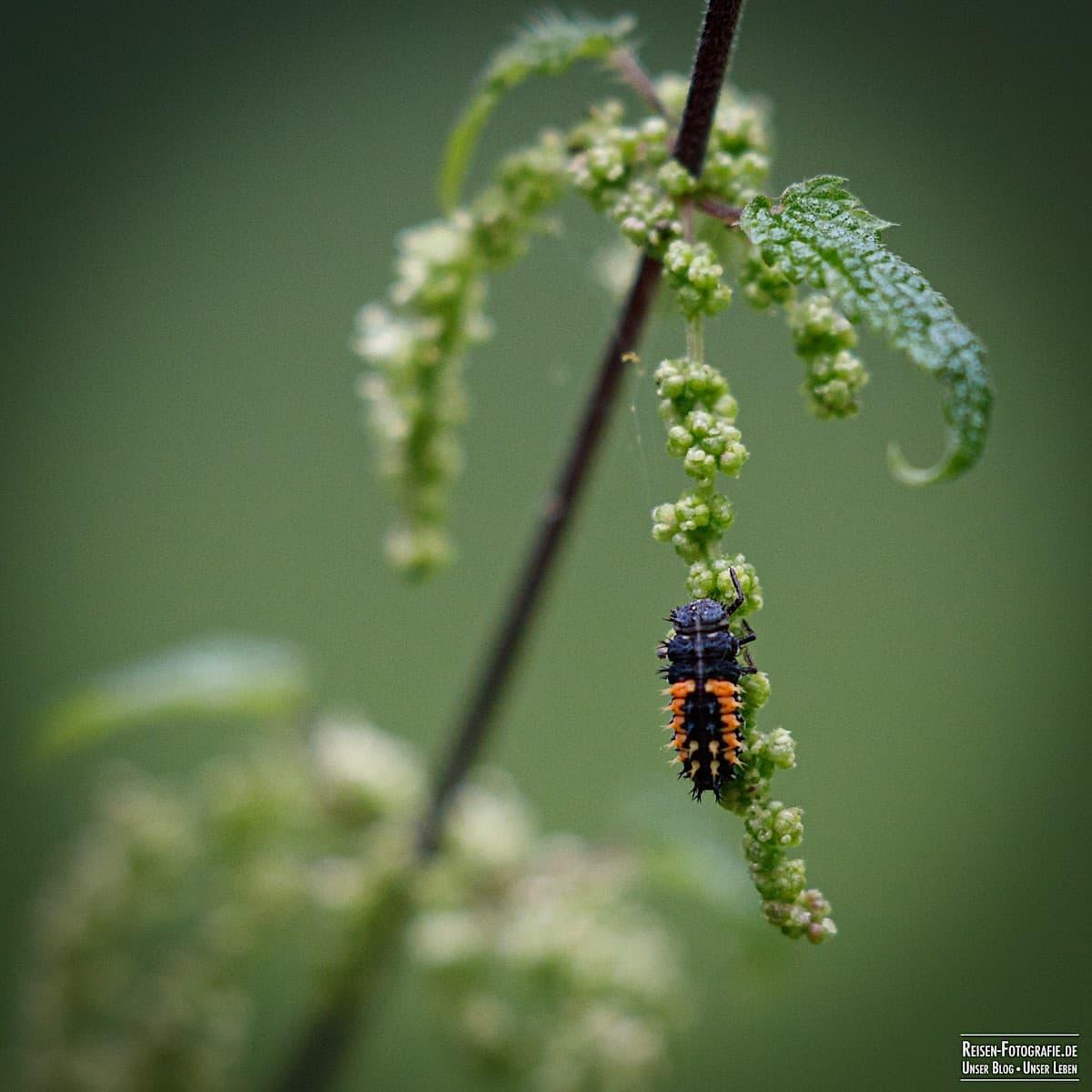 Insekt in Reuschenberg