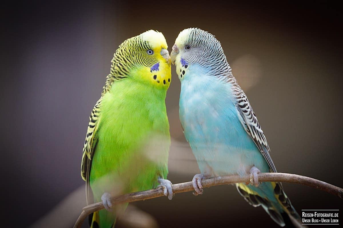 Vögel im Naturwildpark Granat
