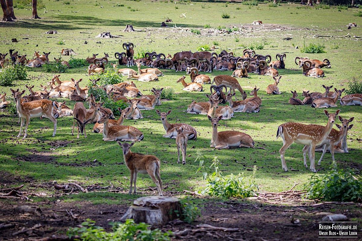 Viele Tiere im Naturwildpark Granat
