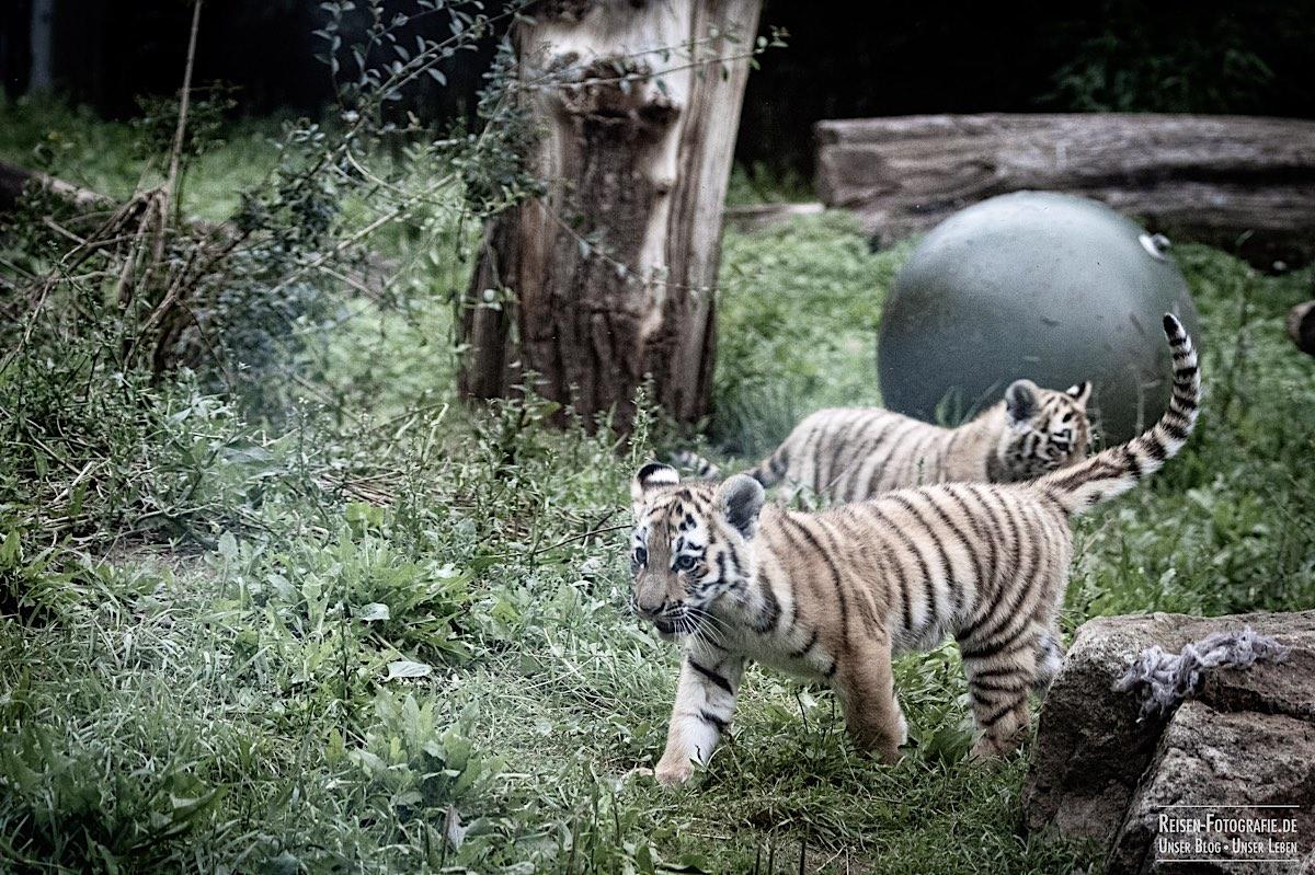 blog-2021-07-30-duisburg-tiger-29