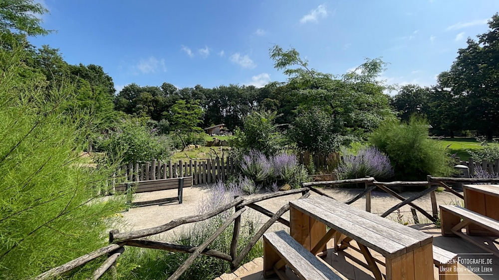 Krefelder Zoo Savanne