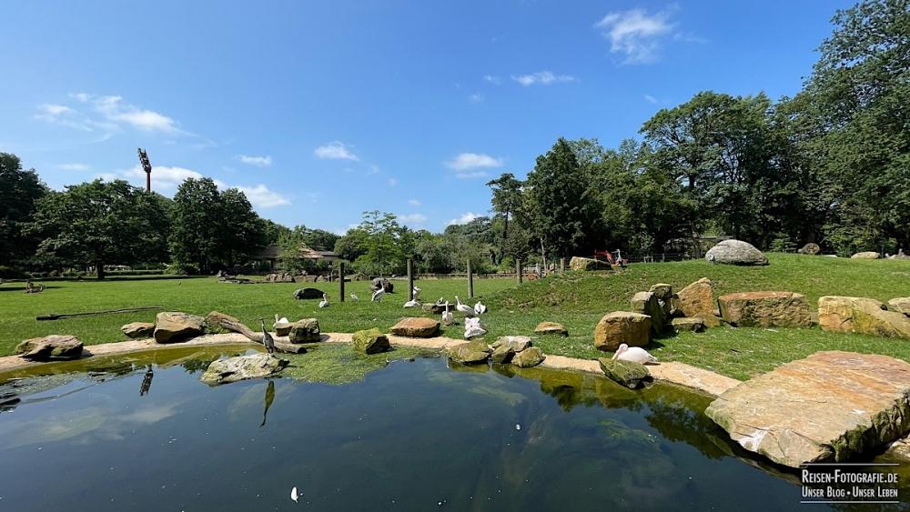 Savanne im Zoo Krefeld