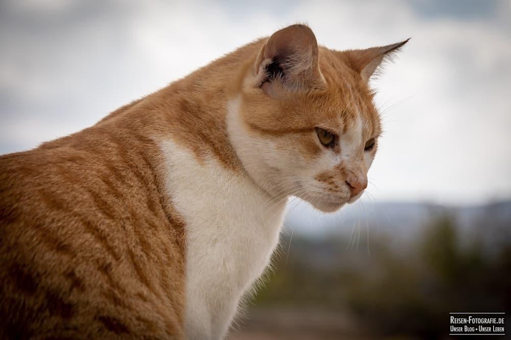 Tierfotografie Tipps